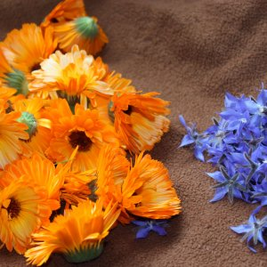 Fleurs de calendula et de bourrache